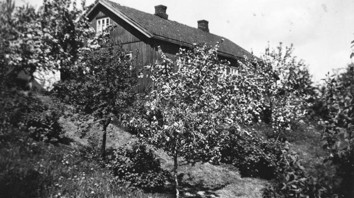 Frukthagen på Torud. Hovedbygningen ovenfor.