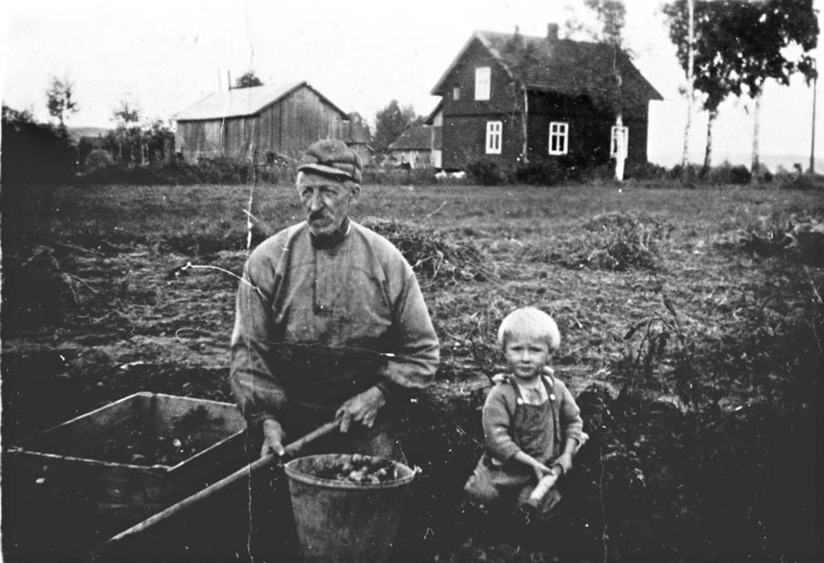 Potetopptagning. Mann og en liten gutt. Gården Haugerøen i bakgrunnen.