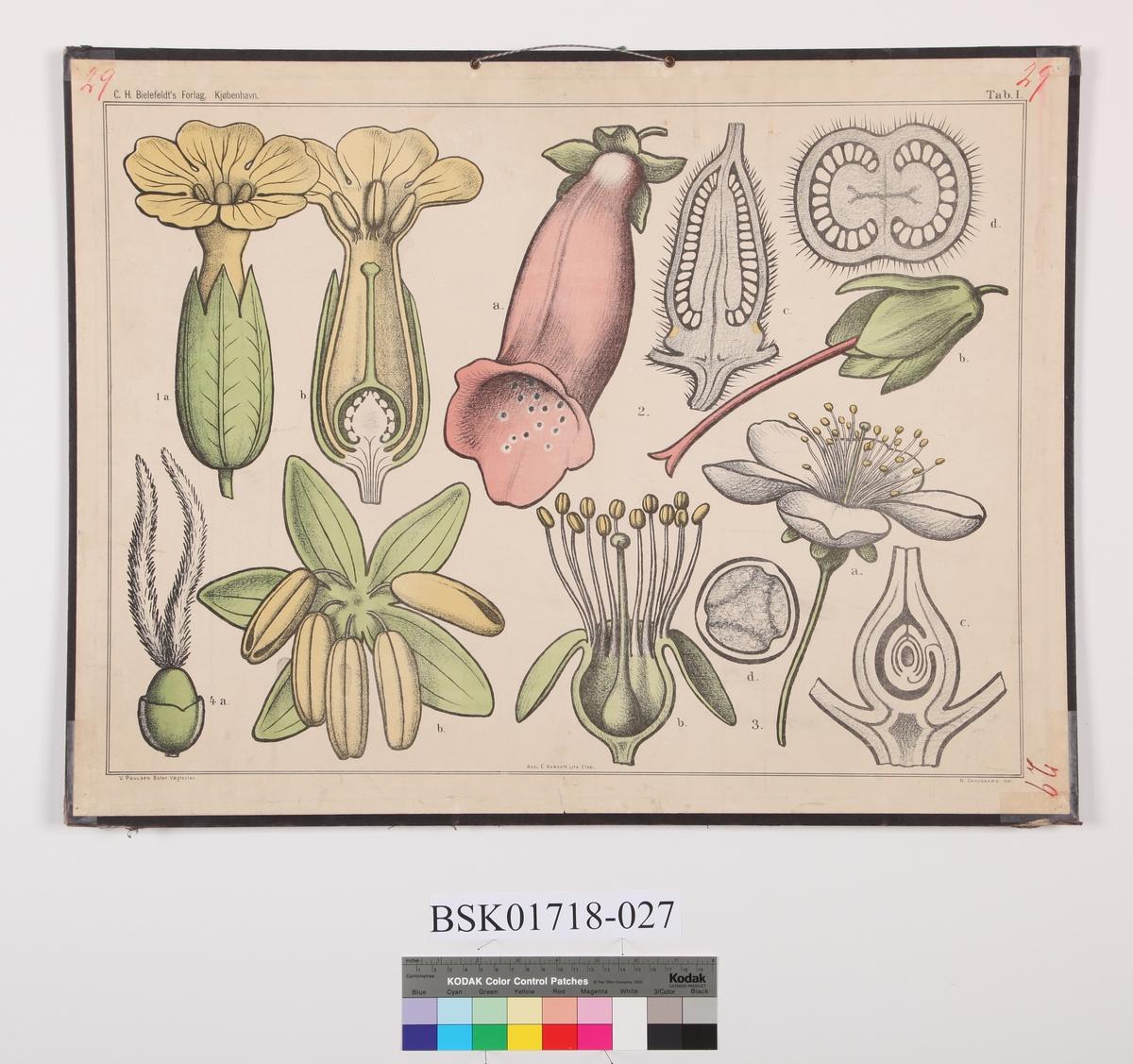 Sambladete blomster