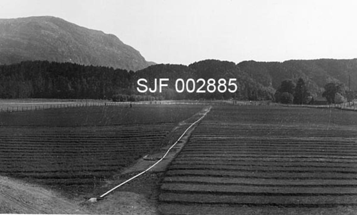 """Frilandsarealer for skogplanteproduksjon ved Ritland planteskole i Suldal i Rogaland.  Fotografiet er tatt fra et forholdsvis høyt punkt over det oppdyrkete slettelandet der det er opparbeidet plantesenger med mellomliggende gangsoner.  På tvers av arealet er det en veg, og nesten midt i denne vegen er det lagt et rør.  Røret er en del av et vanningsanlegg, som kom i full drift i 1949, og som straks viste seg meget nyttig.  """"I verste turkebolken frå 17. juni til 20. juli var vatningsanlegget i gong frå tidlig morgon til sein kvell kvar dag, både over frø- og plantesenger.  Utan kunstig vatning hadde det truleg gått gale"""", heter det i årsmeldinga til Rogaland Skogselskap fra 1949.  Vannet ble hentet fra elva vi skimter i bakgrunnen.  På motsatt side av vassdraget er det lave, skogkledde åser, og i bakgrunnen til venstre et noe mer markant fjell."""
