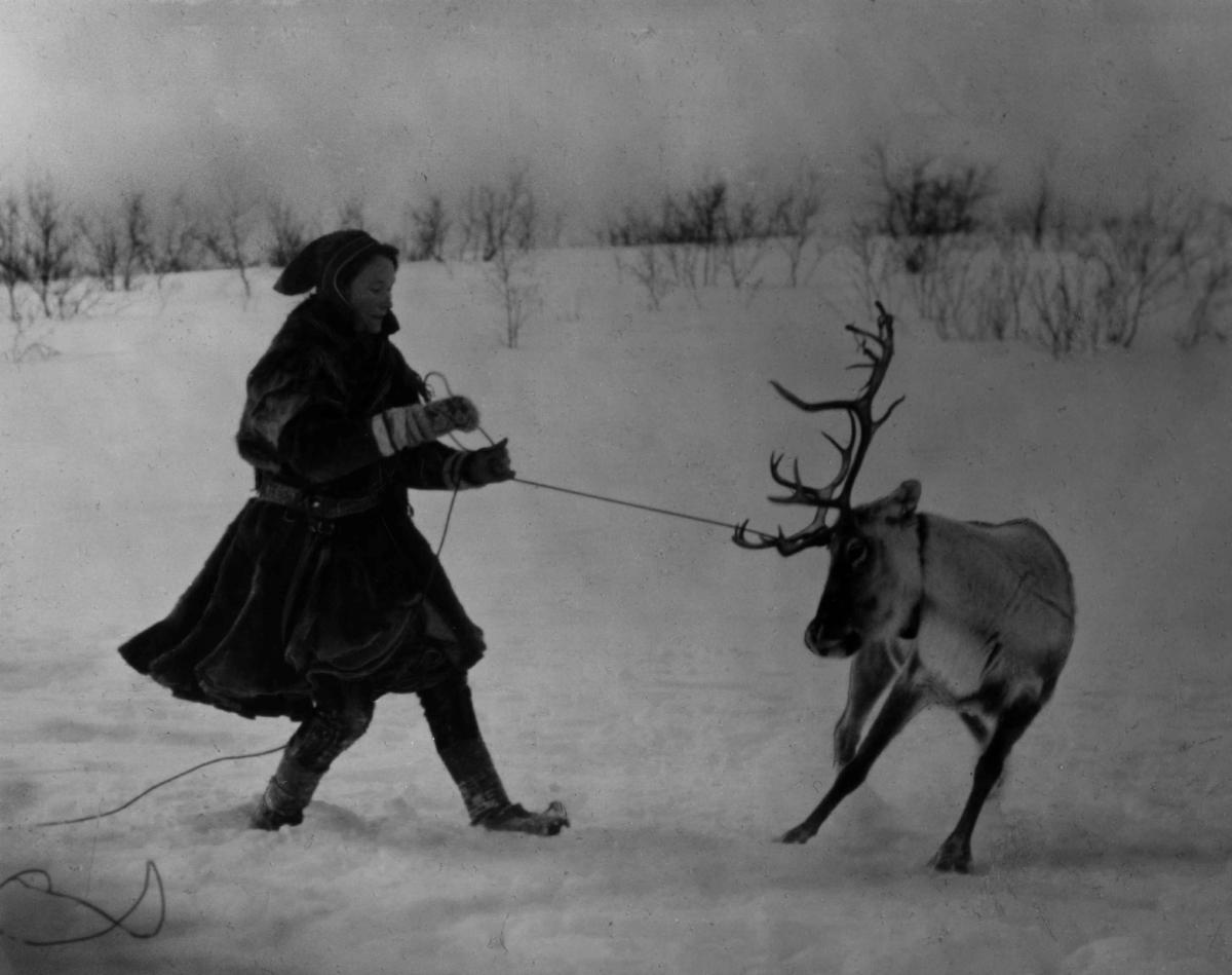 """Lassokasting. Samekvinne har fanget et reinsdyr. Fra filmen """"Same Jakki"""" fra 1957 av Per Høst. Finnmark."""
