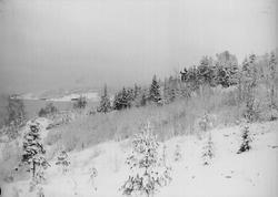 Vinterbilde fra Digerud, Frogn, Akershus, 1908.