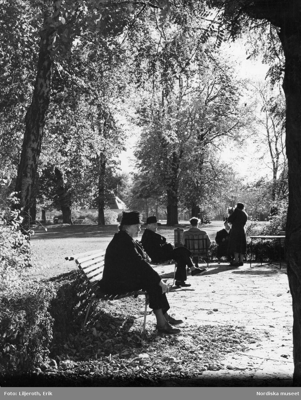 En höstdag i en park i Malmö