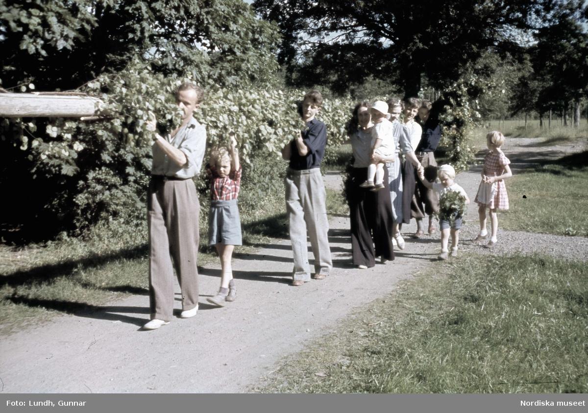 Midsommarfirande vid Jacobsbergs gård i Mälarhöjden. Barn och vuxna bär tillsammans fram midsommarstången.