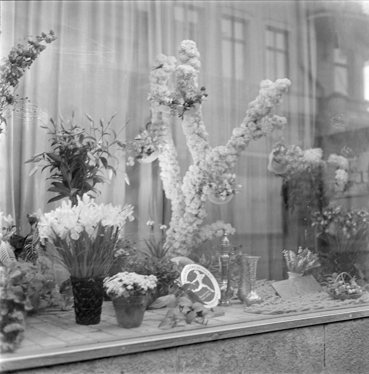 Viola Blomsteraffärs skyltfönster, Drottninggatan 1, kvarteret Rådhuset, Uppsala