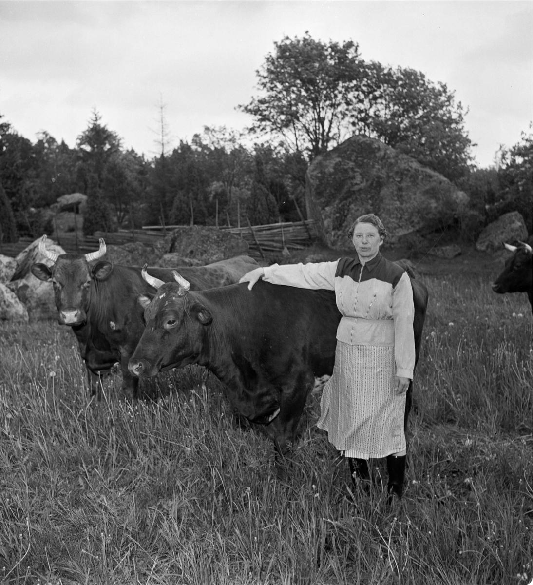 Karin Fransson, Knivsbrunna, Danmarks socken, Uppland vallar kor juni 1956