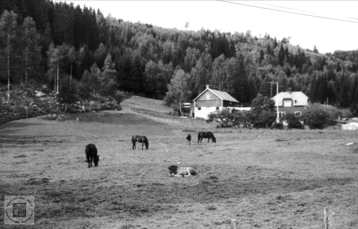 Hestar på Monan i Bjelland.