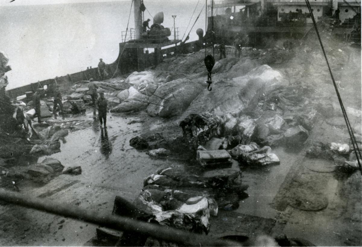 Kjøtt og ben på forplanen. - Ombord i Fl/K ' Vestfold' (b. 1931, Furness Shipbuilding Co. Ltd, Haverton Hill).