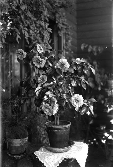Blomsterhörna med blomprakt, troligen en gardenia