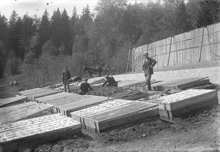 Drivbänkar på Ramdalens handelsträdgård, Skredsvik