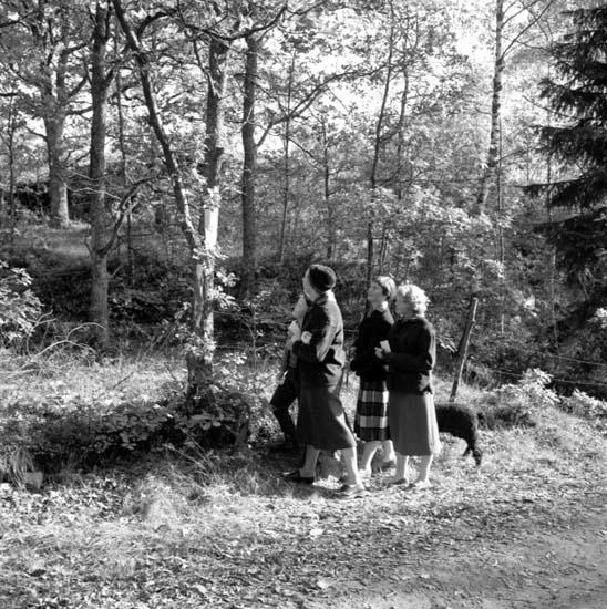 """Enligt notering: """"Skogspromenader 19/10 -58""""."""