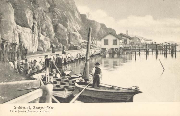 """Tryckt text på kortet: """"Grebbestad. Skarpsillfiske."""" """"Foto Malla Carlssons förlag."""""""
