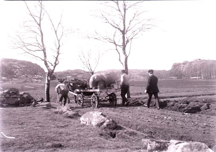 """Enligt text som medföljde bilden: """"Arbete Norr Hamre 1918/1919""""."""