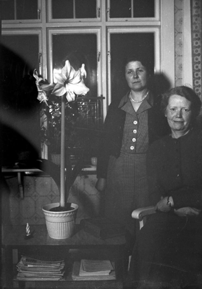 Två kvinnor och en amaryllis