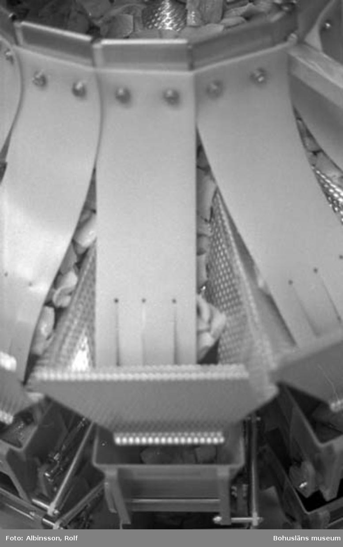 """Enligt fotografens noteringar: """"Uppe på ställningen. Här ser man sillen komma ner på toppen av den automatiska vågen.""""  Fototid: 1996-03-14.  1996-03-15"""