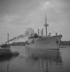M/S Vingaland 1951.