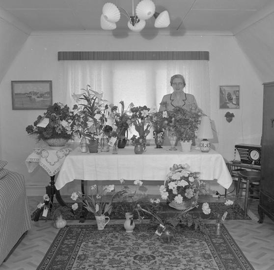 """Text till bilden: """"Fru Anna Larsson, Pallasgatan 8. 50 år"""""""