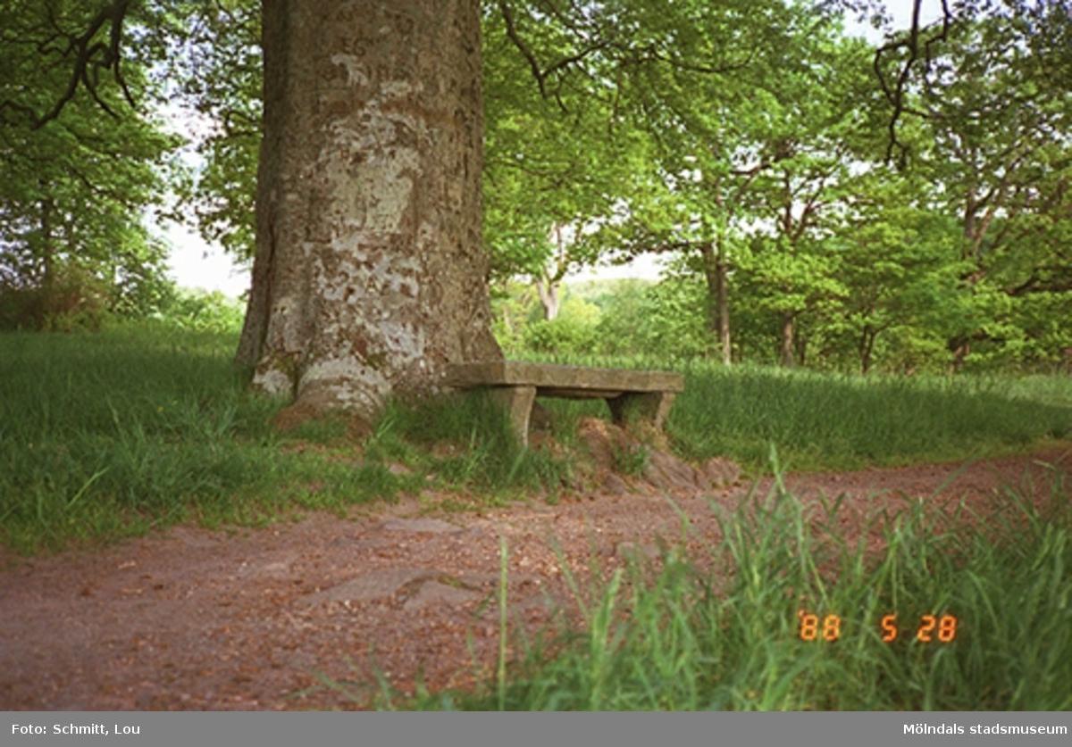 En stenbänk som står placerad bredvid ett stort träd. Framför detta löper en grusstig. Gunnebo slott, 1988.