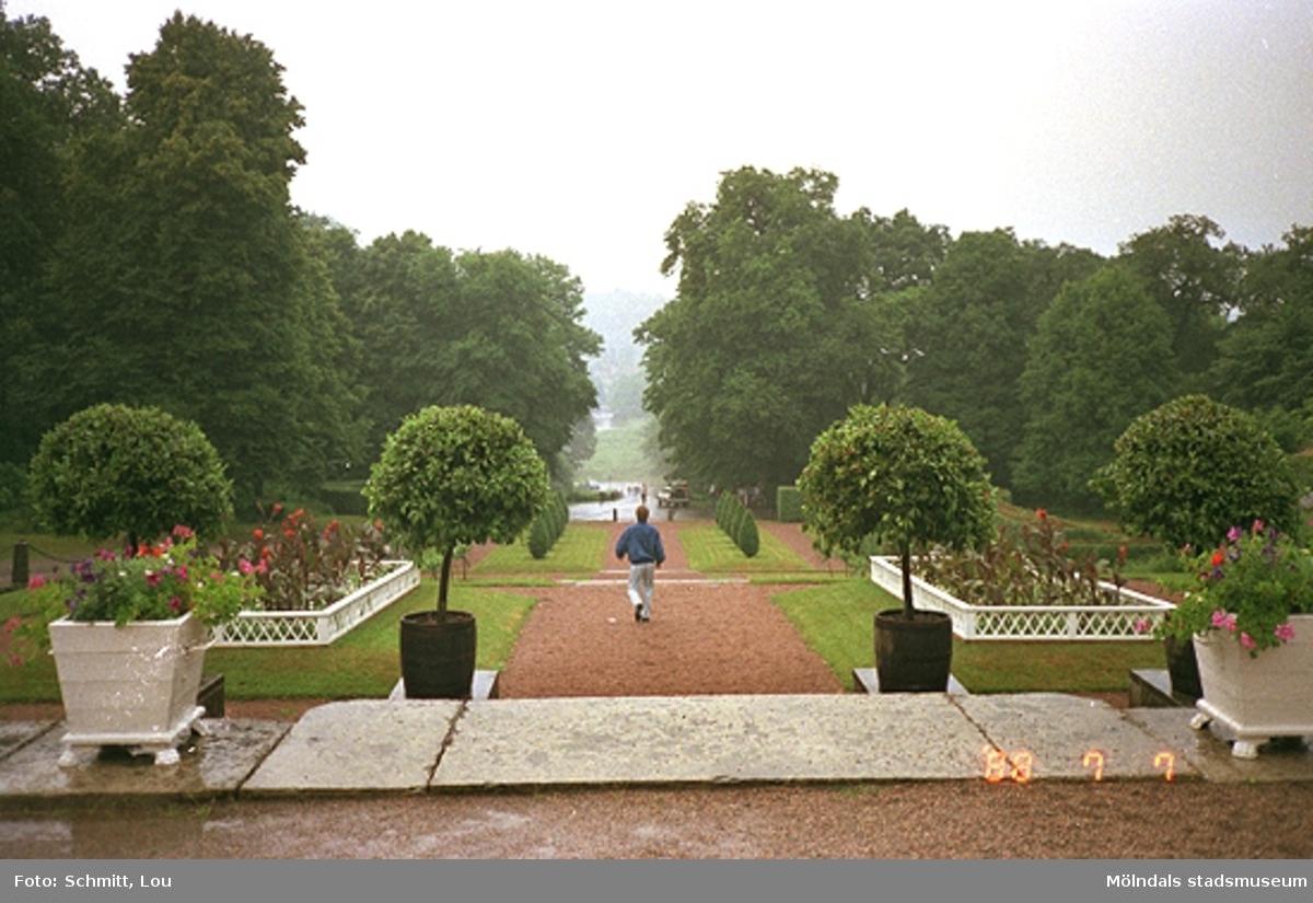 En del av parken vid Gunnebo slotts framsida. En man promenerar på grusgången ner mot John Halls väg. Vid sidan om grusgången står växter i vita urnor, gräsmattor och rabatter. I bakgrunden står höga träd.