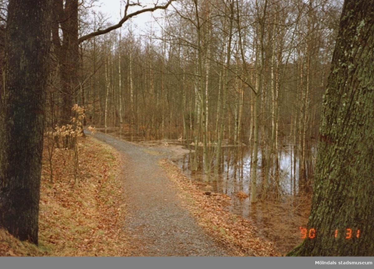 En grusväg genom skogen som passerar en sjö.
