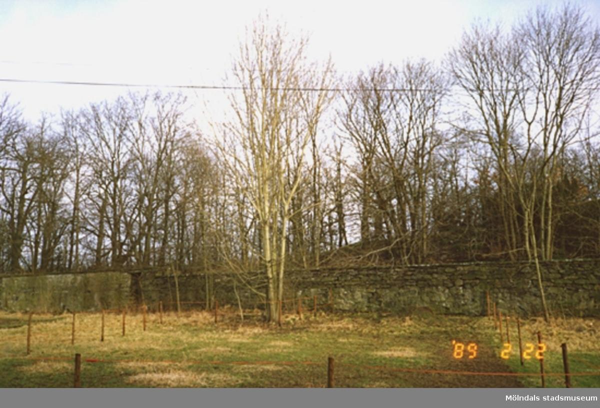 En stenmur omgärdad av höga träd.