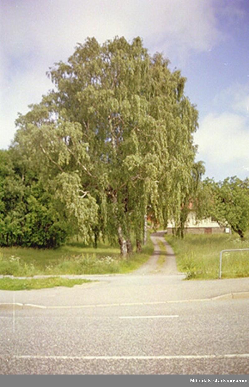 Våmmedal 3:3 i Kållered, 2001-05-15. Hör ihop med: 2002_0279 - 0286.
