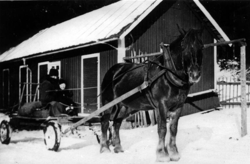 """Albin Holm efterträdde sin far som lantbrevbärare 1939, på linjen Vrigstad - Horveryd - Hjärtetorp - Gettersryd - Bjällebo - Virestorp - Porsamålen - Trismålen - Åkaköp - Vrigstad. Han körde turen varje dag oftast med moped eller cykel, på vintern med häst och kärra. Han pensionerades 1961. På bilden från 1945, tagen på gårdsplanen till hans hus, är han redo för sin tur. Hyresgästens son, Lars-Åke, får ta en """"låtsastur"""" med hästen."""