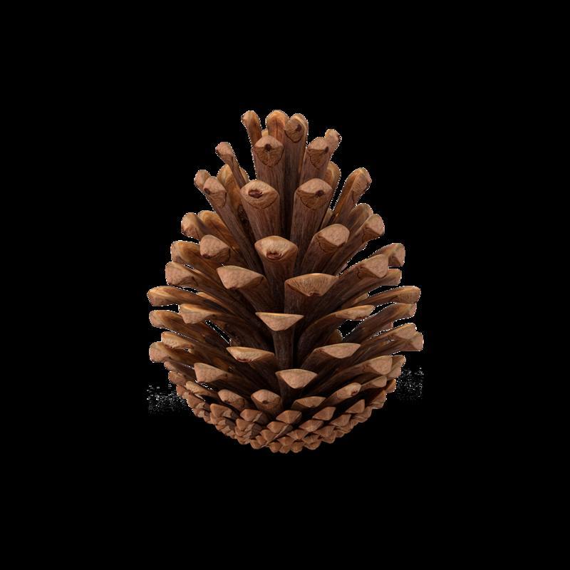 Fir-Cone-V2.H03.2k.png