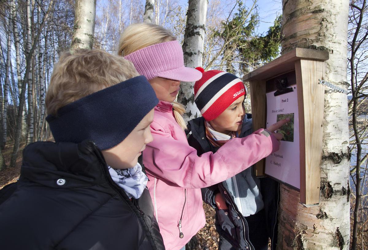 En jente og to gutter leser på en naturstiplakat som henger på et tre.