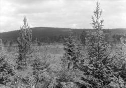Løten Almenning. Landskap, myr, skog.
