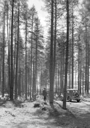 Løten Almenning,skogsbilveg, personbil D-890, ukjent mann. F