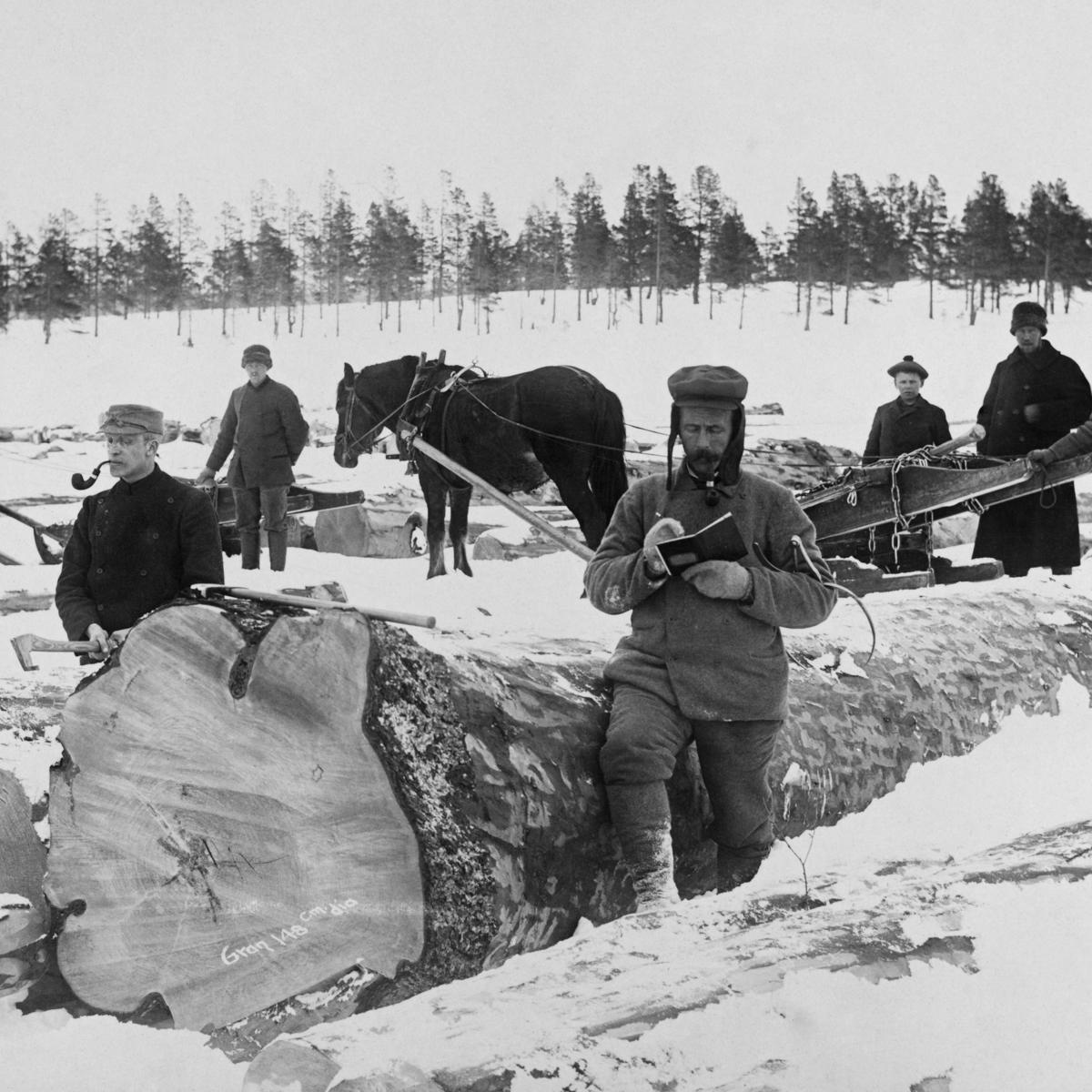 Tømmermåling på Femunden, Engerdal, Hedmark. (1905). (Foto/Photo)