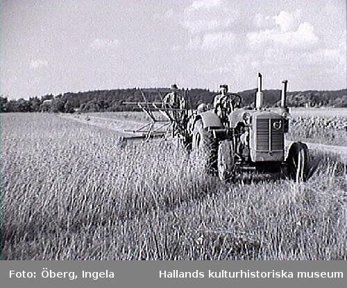 Skörd. Rune kör traktorn, modell Volvo T-43. På bild 2 och 3 kör Ingela Öberg