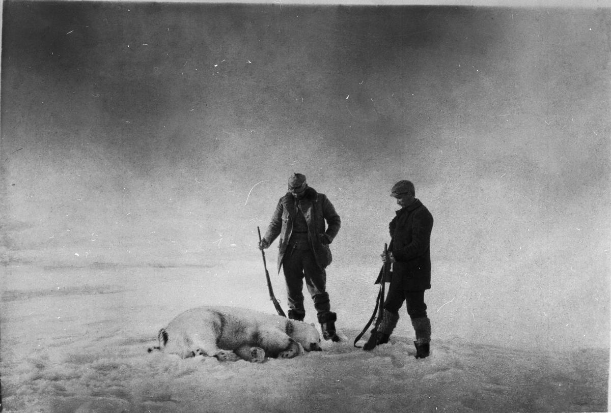 Ett välkommet byte (isbjörn). Till vänster Fraenkel och till höger Strindberg. Framtagning av bilderna gjordes av docent John Hertzberg år 1930 på Fotografi, Tekniska Högskolan.