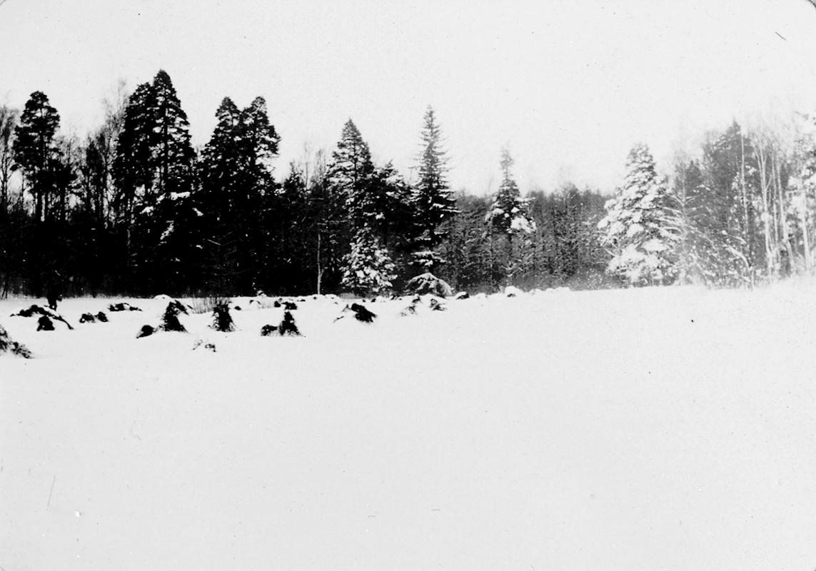 Skogsparti  vid Säbylund herrgård (?)