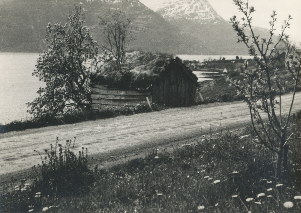 Motiv av tørkestova fra Storvika i Ørskog før den ble flyttet til Sunnmøre Musem. Denne ble bygd trolig i begynnelsen av 1800-tallet.