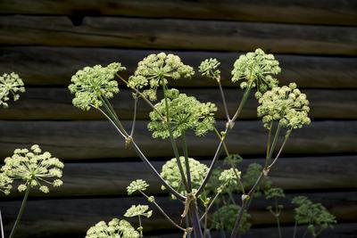 Sommergrønt foran tømmervegg