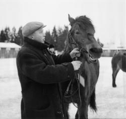 """Vardens arkiv. """"Hestesjå på Klosterskogen""""  21.01.1954"""