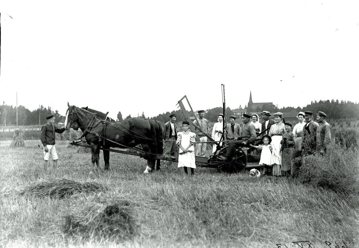 Skörd i Malma, 1900-1910.