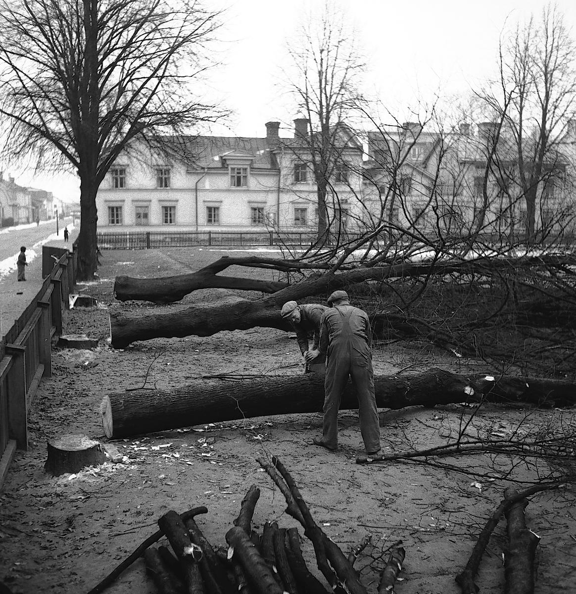 Nya Gymnastikhuset. Norra Skolan. November 1945