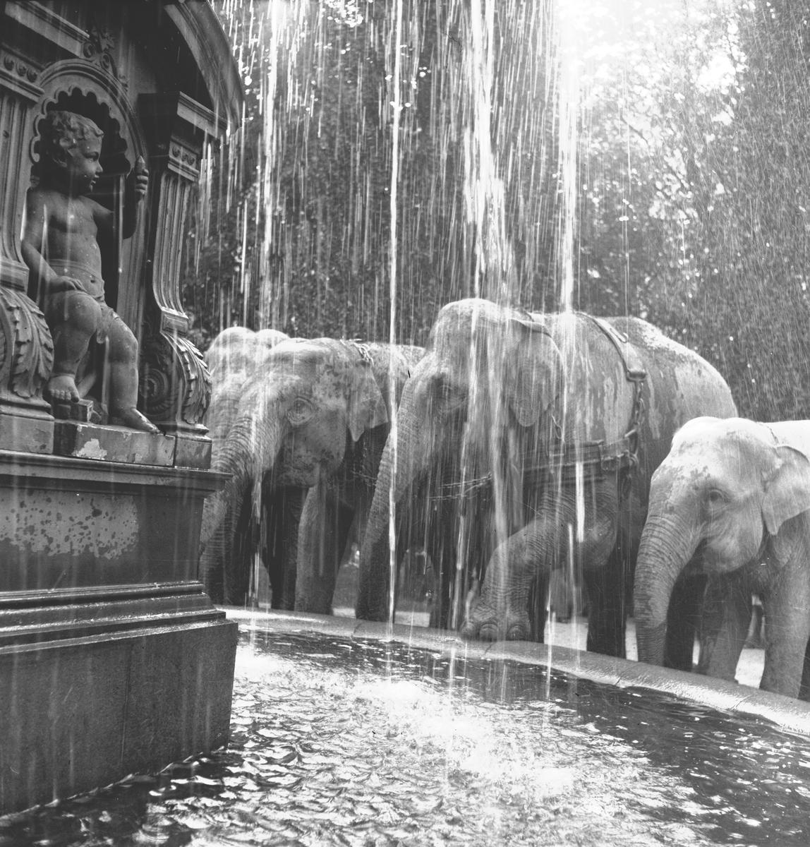 Cirkus Zoo, ankomst till stan. Augusti 1944
