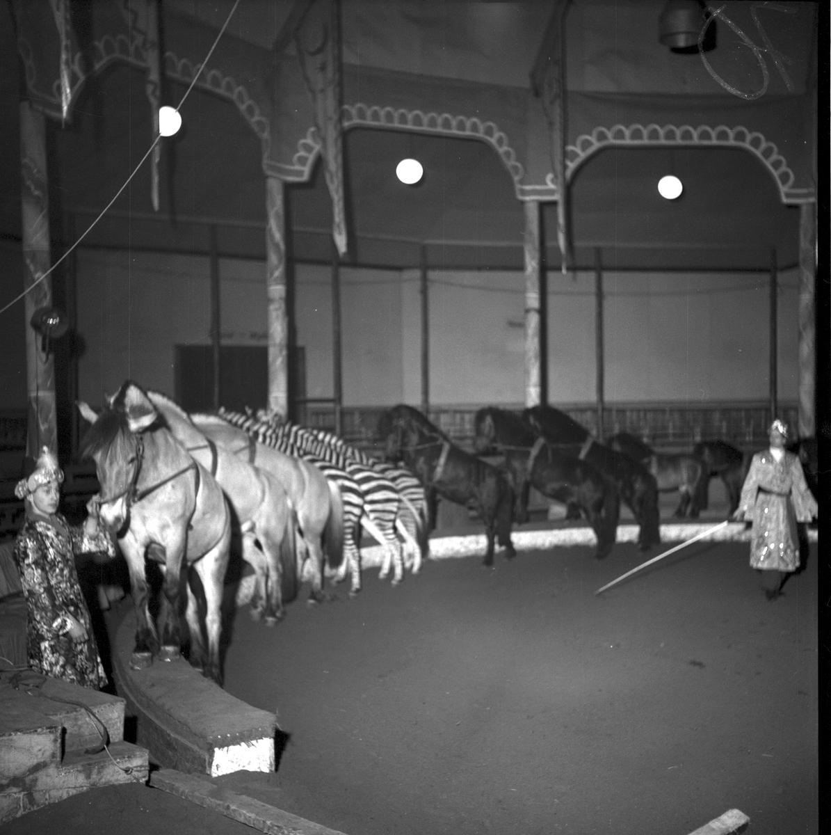 Furuviksparken invigdes 1936 Folkdanslaget Furuviks Ungdomslag och Barnkabarén blev Furuviksbarnen. Ungdomscirkusen med hästar och zebror Cirkusbyggnaden  Teater-Cirkus med cirka 600 platser, uppförd 1940.