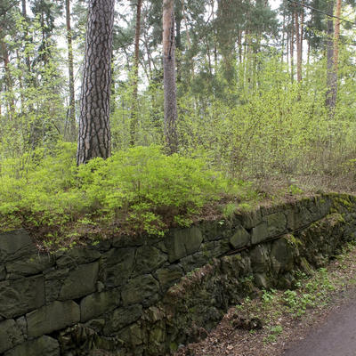 kongeskogen2_liten.jpg. Foto/Photo
