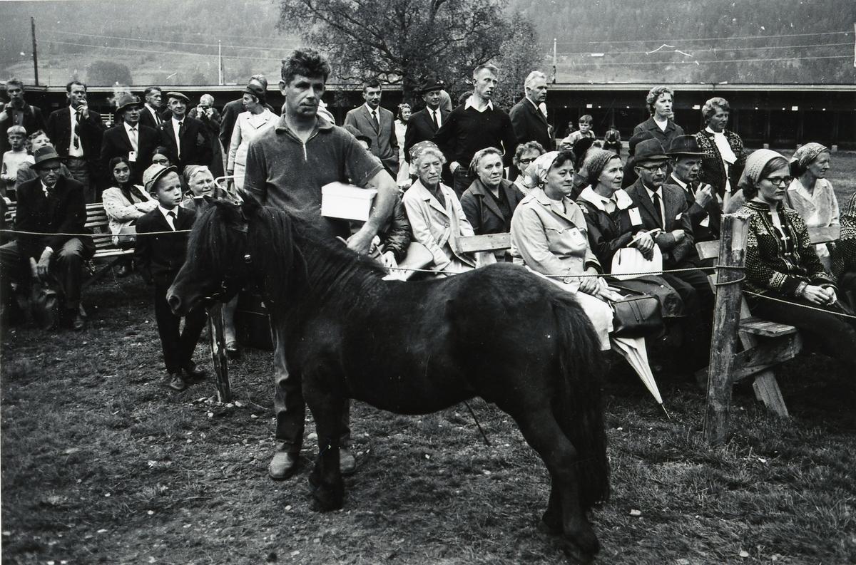 Mønstring av pony