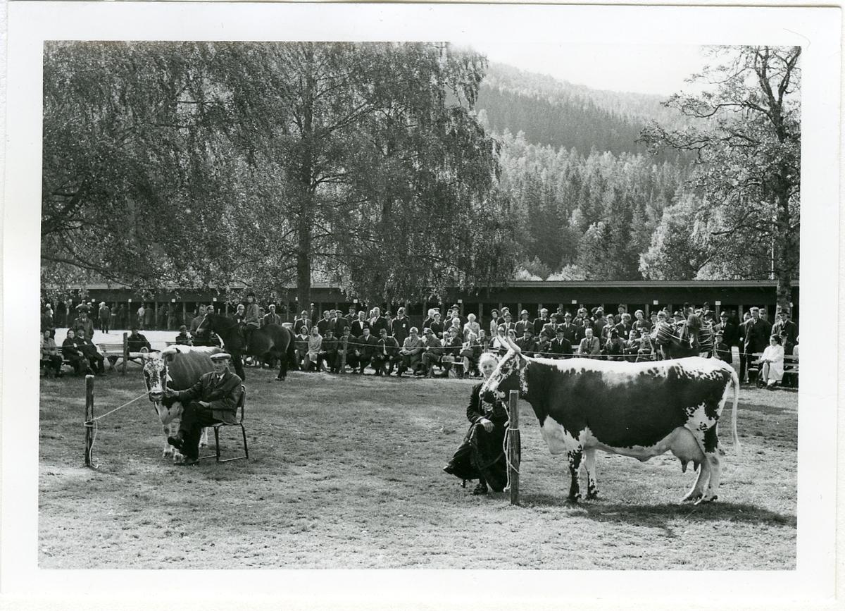 Johannes og Borghild Glosimot mønstrar for 50. gong på Dyrsku'n i 1971.