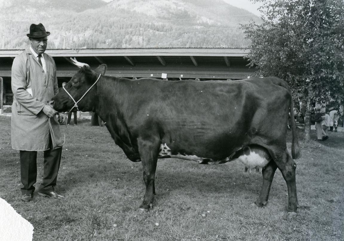 Fyrste kyri som fekk Seljordprisen var Reidar Stordal si ku 1 Gullmøy (9) i 1969.