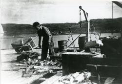 Ragnar Gjerp jobber med fisk på kaia i Risfjorden.