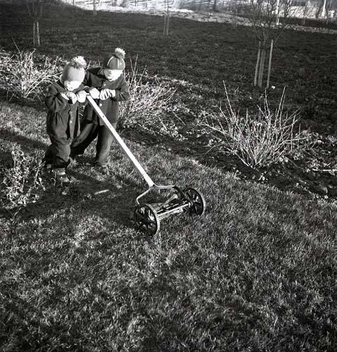 Vintern syns inte till denna decemberdag 1951 då två barn klipper gräset. Gräsmattan är frodig och pojkarna skjuter klipparen framför sig iförda mössor och vantar. Buskar planterade i trädgården har kala grenar och träden i bakgrunden likaså.