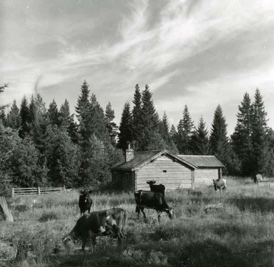 Kor vid Bråvallen, Hellbo.