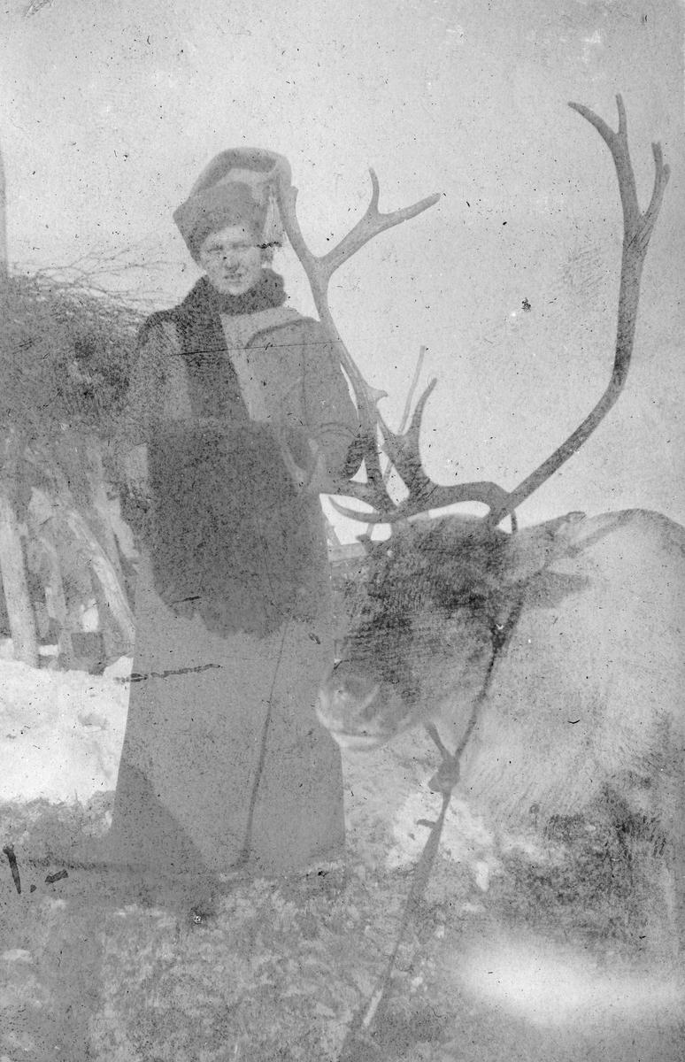 Ragnhild Gundersen oppstilt ved siden av reinsdyr. Bildet er fra en sledetur omkring Kirkenes, 1912.